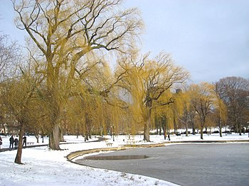 Winter scene in the Public Garden, Boston, Mas...