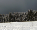 Wintergewitter am Rande des Nationalparks.png