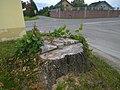 Winterlinde Tillmitsch.jpg