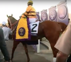 Wise Dan - Entering the winners' circle after winning the 2012 Breeders' Cup Mile