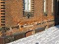 Wismar Zollhaus Mauerschaeden 2010-01-26 087.jpg