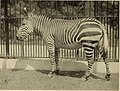 Zoological Society bulletin (1913) (14760155211).jpg
