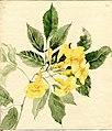 """Trumpet-bush"" by Mary Louise McQuiston Evans.jpg"