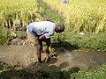 (ನೀರಾವರಿ) irrigation.jpg