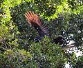 (1)Coronation Park Auburn 038.jpg