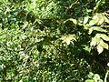 Árvores e trepadeiras 3.jpg