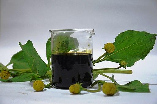Aceite de Jambú