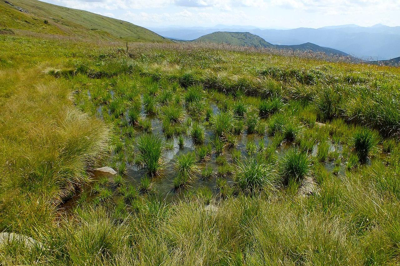 Безіменне болотне озерце групи Ведмедиці