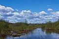 Відтінки блакитного на Бондарівському болоті.jpg