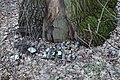Голосіївський ліс DSC 0087.jpg
