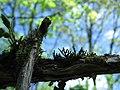 Гора Воронья, листва и мох.jpg