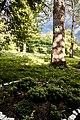 Група вікових дерев тополі білої 19.jpg