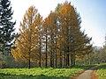Дендрологічний парк Олександрія.jpg