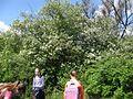 Дендрологічний парк 106.jpg