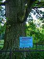 Дуб Юстияновский. Памятник природы. Табличка с данными. Oak Yustiyanovsky. Natural monument. Data plate. - panoramio.jpg