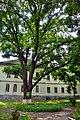 Дуб черешчатий, м. Полтава, Першотравневий проспект, 22 - 2015-07-02 025.jpg
