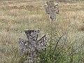 Кам`яний хрест козацького типу 16.jpg