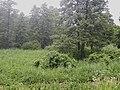 Лісовий заказник біля села Пальчики.jpg