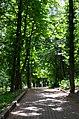 Парк Березовий гай по вулиці Вишгородській у Києві. Фото 3.jpg
