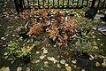 Подготовленные к посадке кустарники в саду им. П.И.Травникова в октябре 2012 года..jpg