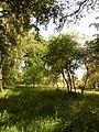 Прилуцький дендропарк Прилуцький район, м. Прилуки, вул. Вавилова, 16 74-107-500 08.jpg