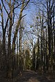 Сирецький дендрологічний парк 22.jpg