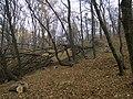 Украина, Киев - Голосеевский лес 150.jpg