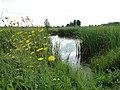 Цветы на берегу Лаптевского пруда - panoramio.jpg
