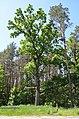 Чернечий Ліс (заказник) біля Ходосівки 03.jpg