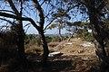 מבצר עתלית - אתרי מורשת במישור החוף 2016 (40).jpg