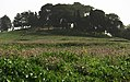 פרחים בתל שמרון Flowers in Tel Shimron.jpg