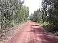 ถนนรอบ หนองกอมเกาะ - panoramio.jpg