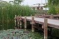つくば研究学園駅前公園のハス - panoramio.jpg