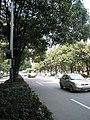 体育东路 - panoramio.jpg
