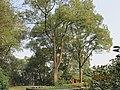南山植物园-大树景色3 - panoramio.jpg