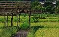 台大安坑農場 - panoramio (3).jpg