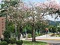 台湾 士林官邸公园 - panoramio.jpg