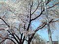 天神川高辻 - panoramio (1).jpg