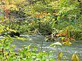 奧入瀨溪流 Oirase Mountain Stream - panoramio.jpg
