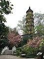 宝塔山公园樱花小筑上拍摄的僧伽塔.jpg