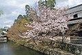 旧大原家住宅前の桜 Apr 3, 2007.jpg