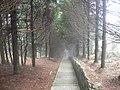 早晨薄雾中的林间幽径 - panoramio.jpg