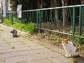 楠町にて Cats in Kusunoki-chō 2013.3.30 - panoramio.jpg