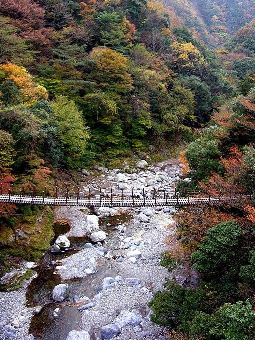 樅木の吊橋 - panoramio