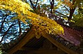 牛滝山大威徳寺 岸和田市 Ushitakisan Daiitokuji 2013.11.23 - panoramio.jpg