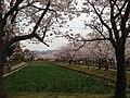 玖島城跡 - panoramio (6).jpg