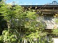 01155jfPoblacion Old Houses San Vicente San Miguel Bulacan Bulacanfvf 08.jpg