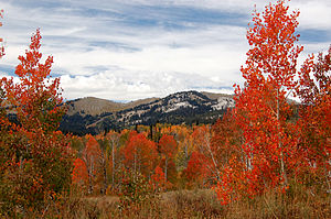Bear River Mountains - Image: 0118 Aspens Near White Canyon