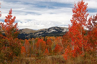 Bear River Range - Image: 0118 Aspens Near White Canyon