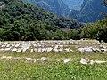 028 Terraces Machu Picchu Peru 2285 (14976318119).jpg